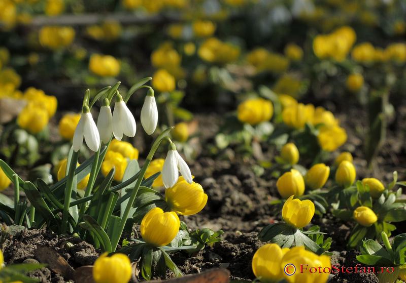 flori de primavara sezon