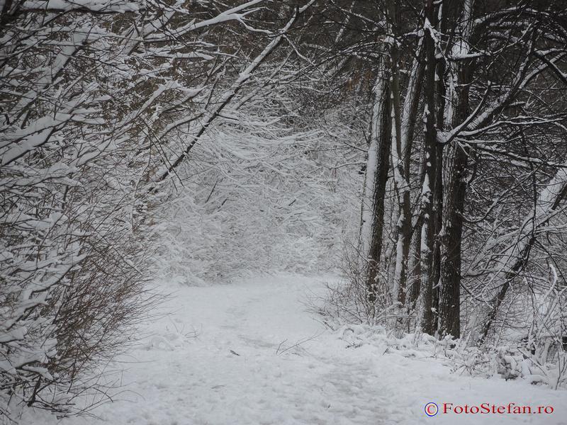 alee parcul national iarna bucuresti