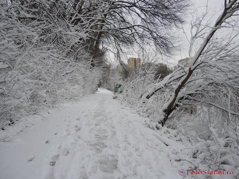 parcul national bucuresti alee iarna