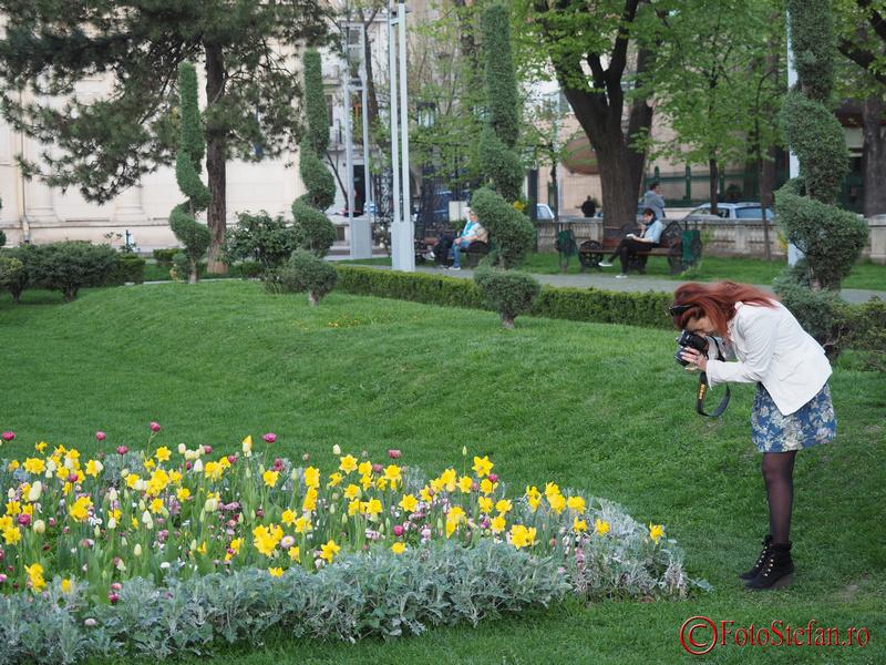 fotografiat flori ateneul roman