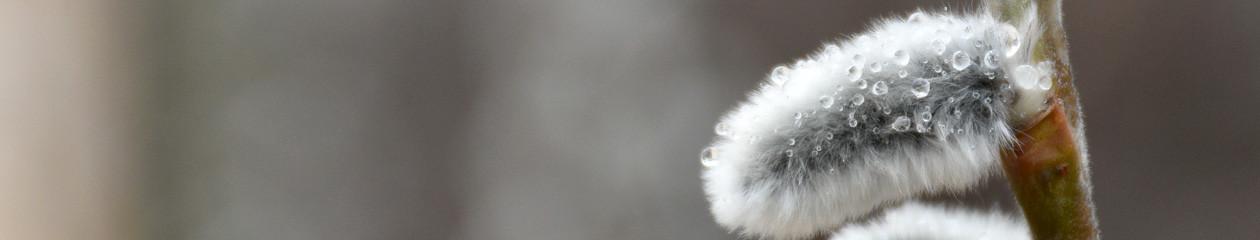 FotoStefan