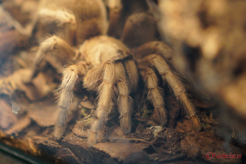 Tesaturi periculoase expozitia de paianjeni scorpioni vii muzeul Antipa