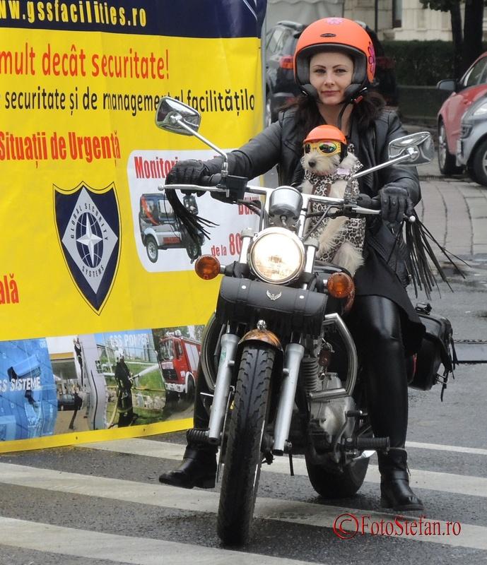 catel pe motocicleta poza foto