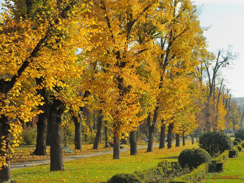 poza toamna parcul carol bucuresti