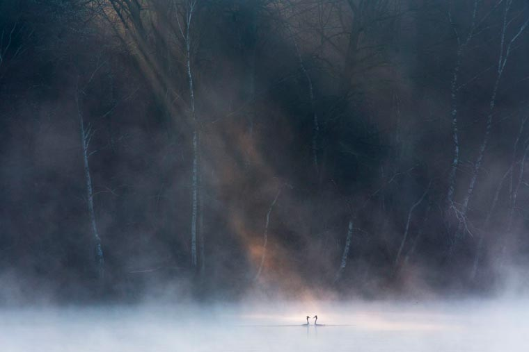 David Peskens fotografie salbatica