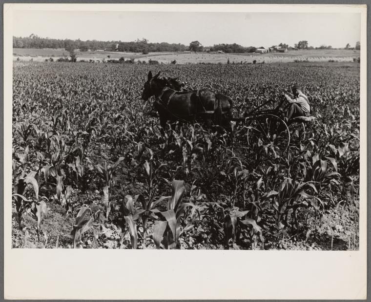poza alb negru agricultura america 1938