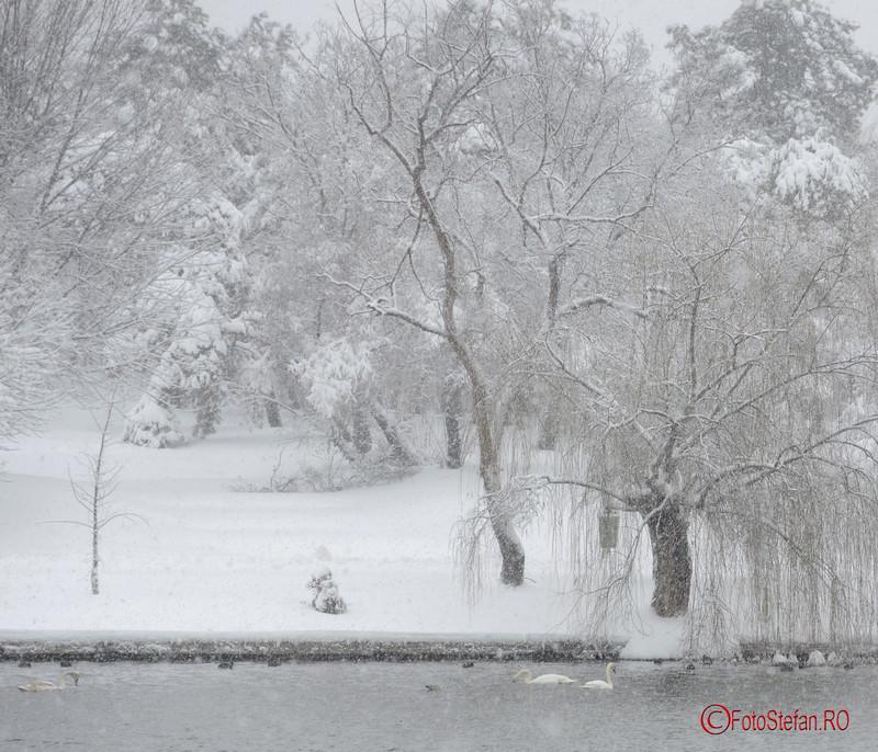 foto poza labede lacul parcul tineretului zapada bucuresti