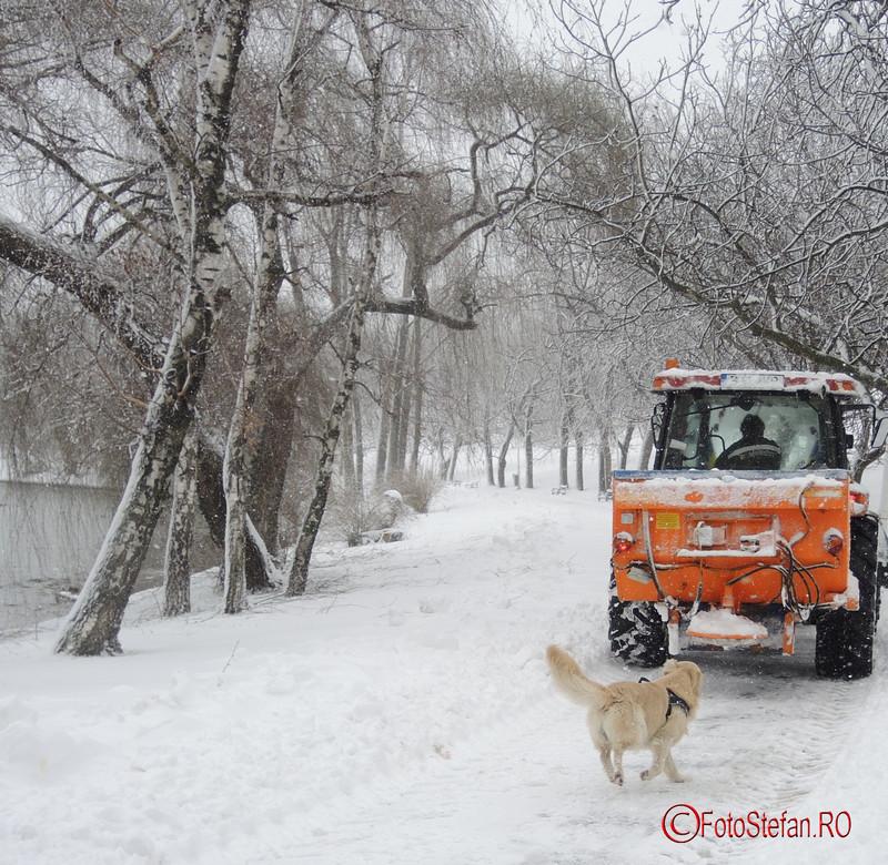 foto catel utilaj zapada parcul tineretului