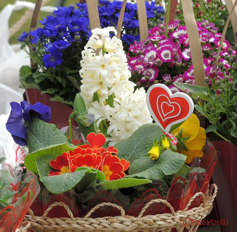 muzeul satului bucuresti flori poze