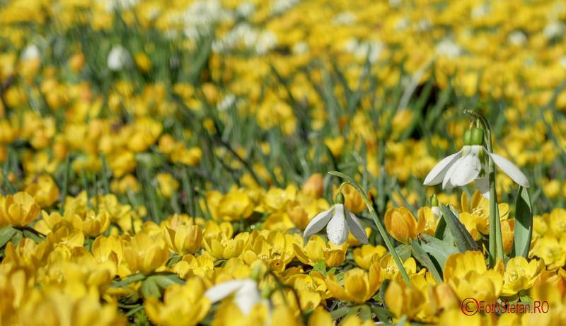 poze flori de primavara bucuresti