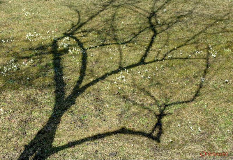 poza umbra copac cismigiu bucuresti
