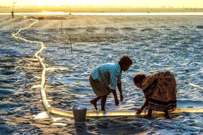 Atkins CIWEM Environmental Photographer of the Year winner - Uttam Kamati, Watering Melon, Teesta Riverbed, India, 2014.