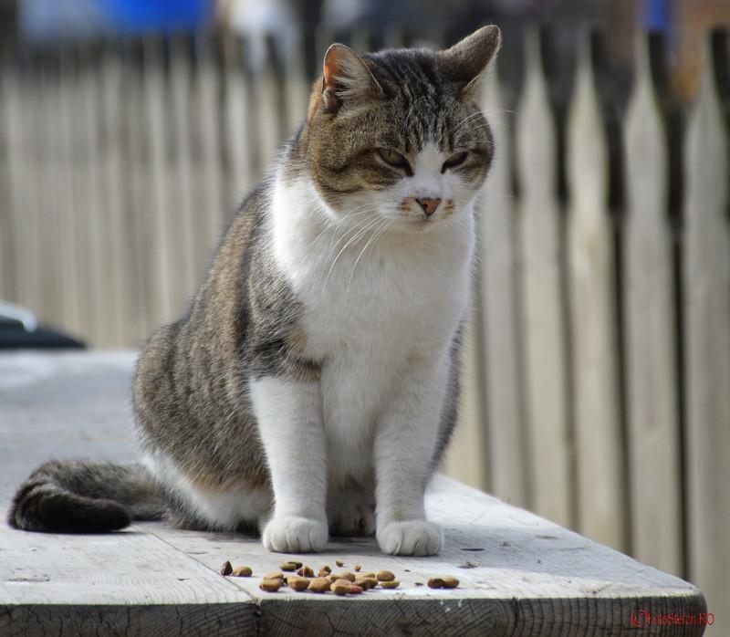 """foto pisica Muzeul Naţional al Satului """"Dimitrie Gusti"""""""