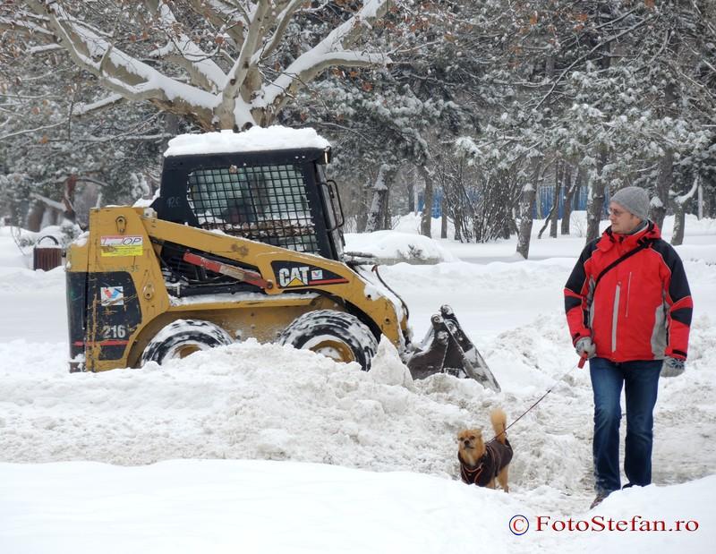 foto iarna plimbare catel bucuresti poza