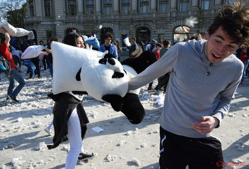 poza urs panda bataie cu perne