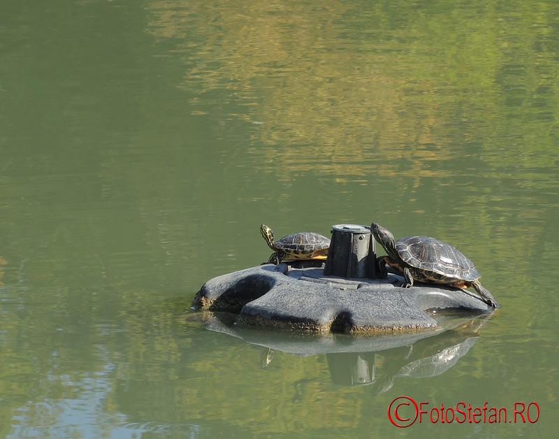 poze broaste testoase parcul National Bucuresti