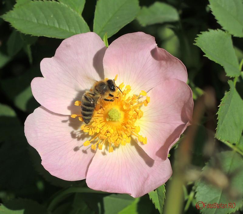 poza albina floare parcul pantelimon bucuresti
