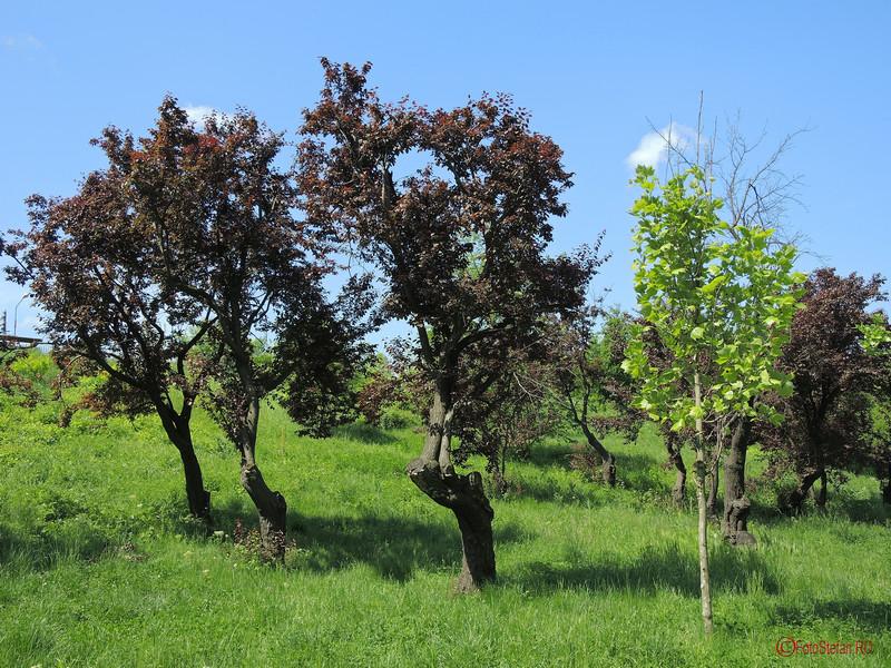 poze copaci parcul pantelimon bucuresti