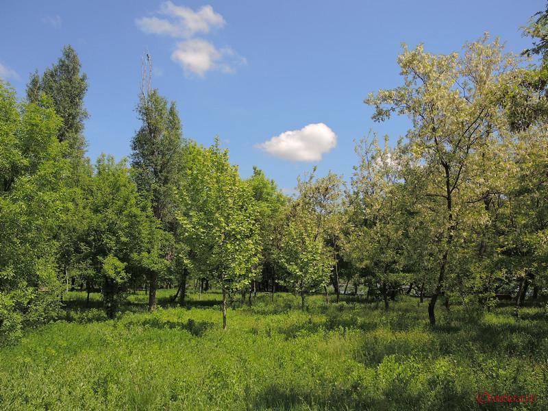 verdeata verde parcul pantelimon bucuresti