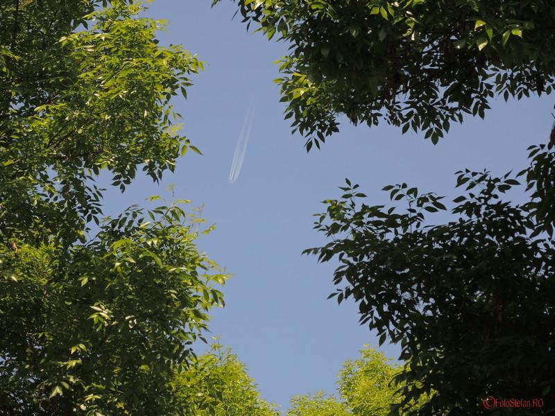 poza avion ramuri copaci parcul pantelimon bucuresti