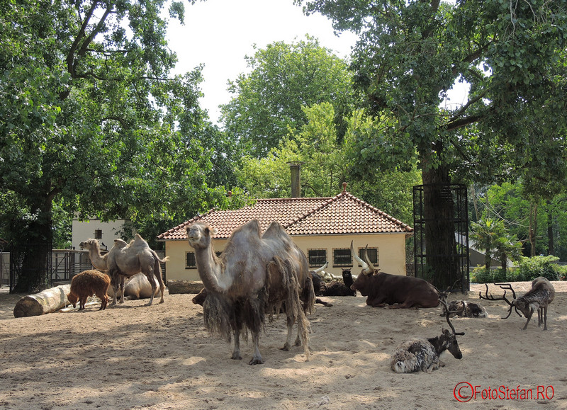 poze Artis Royal Zoo Amsterdam Olanda