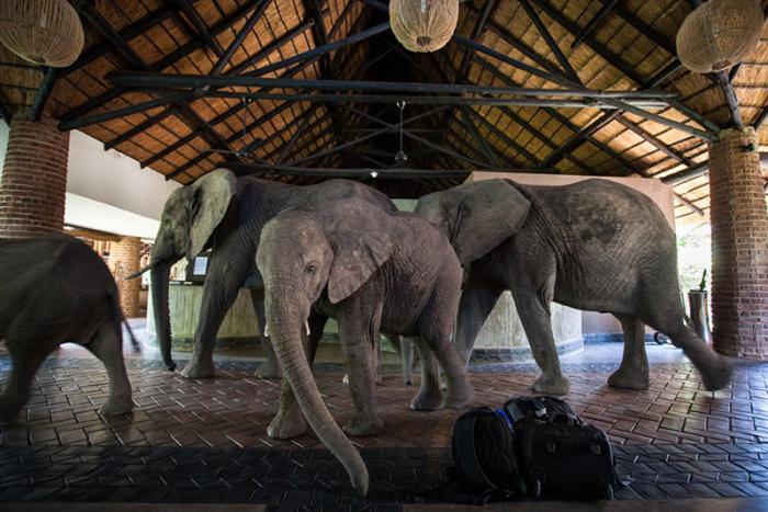 poza elefanti africa