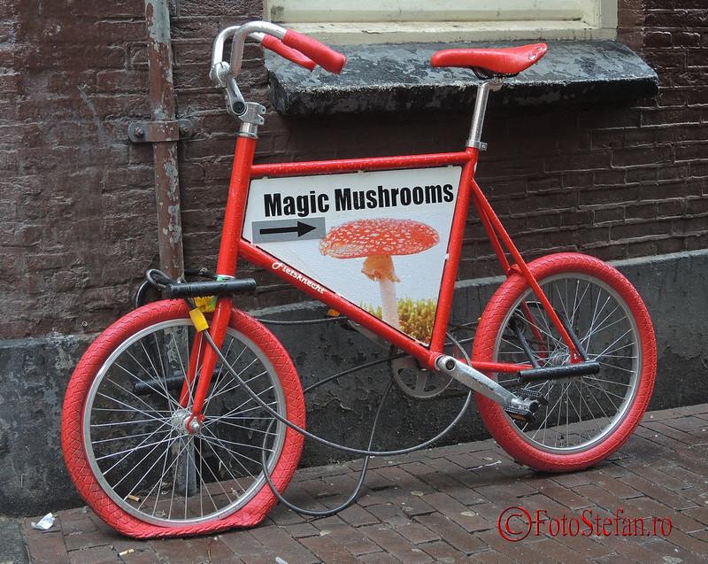 poza bicicleta reclama magazin ciuperci magice amsterdam