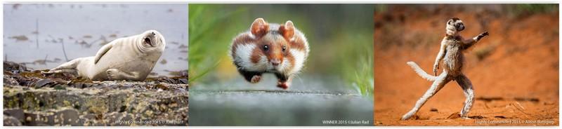 poze animale salbatice amuzante