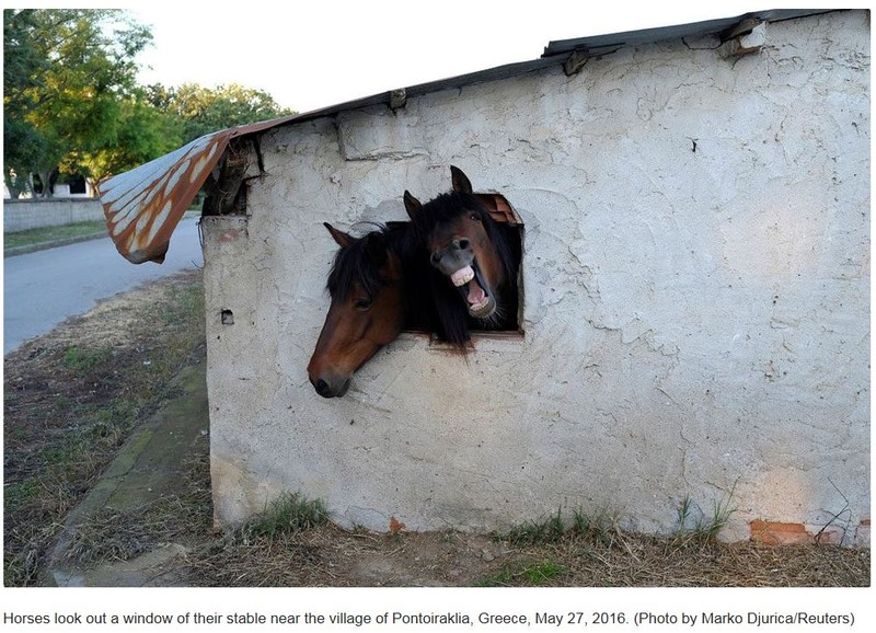 fotografie fotoreporter reuters cai