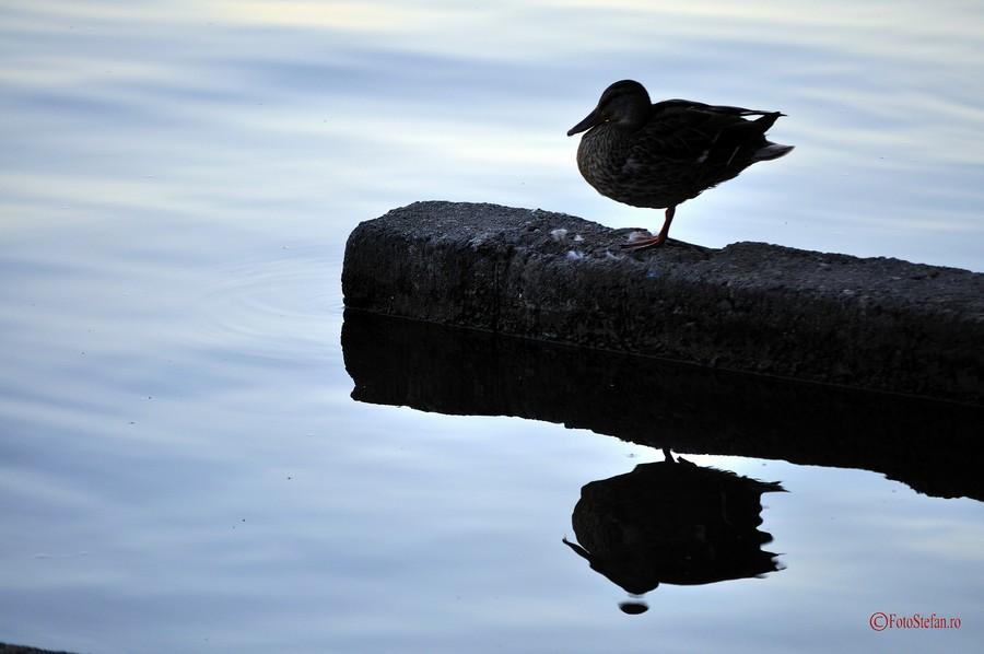 poza rata lacul herastrau bucuresti