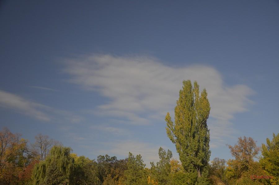 poza copac cer albastru