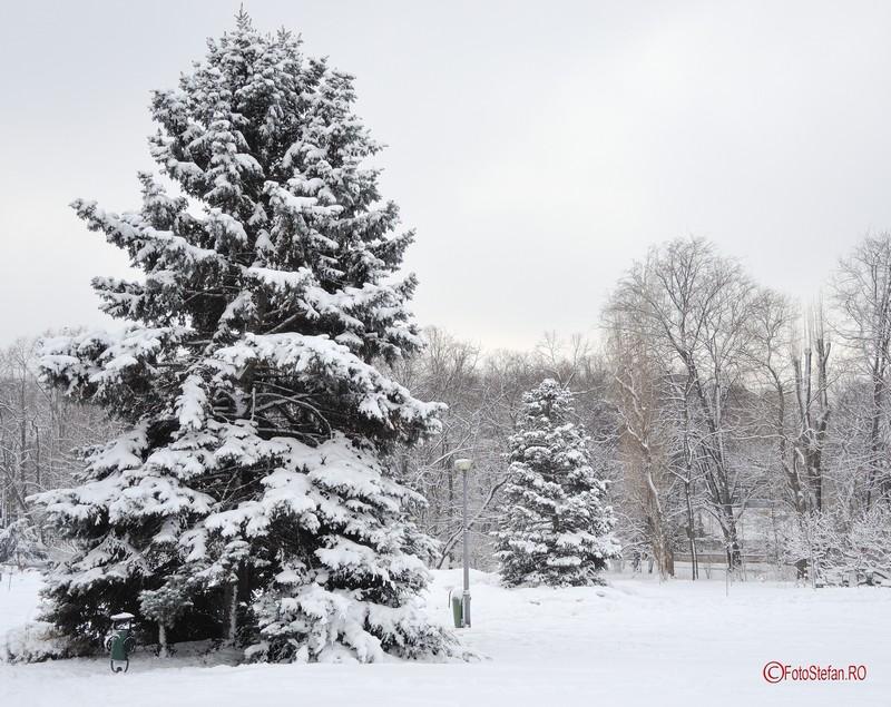 fotografii brazi zapada iarna herastrau