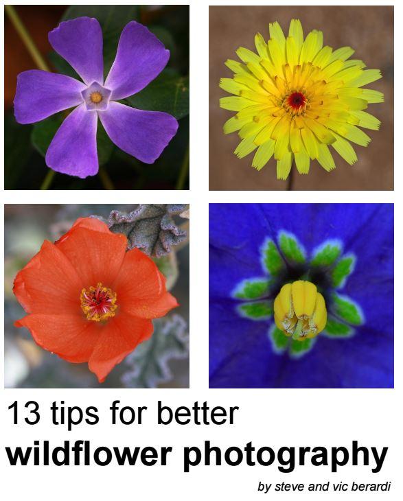 carte electronica online gratuita fotografierea florilor