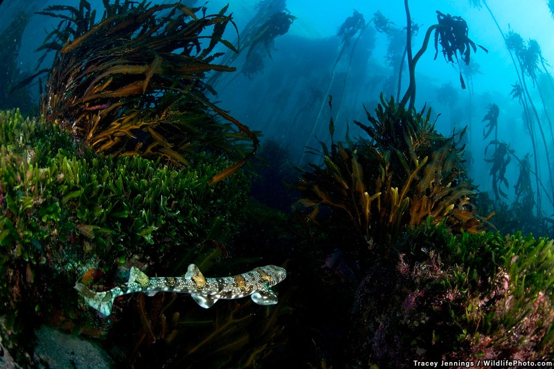 poza subacvatica peste exotic