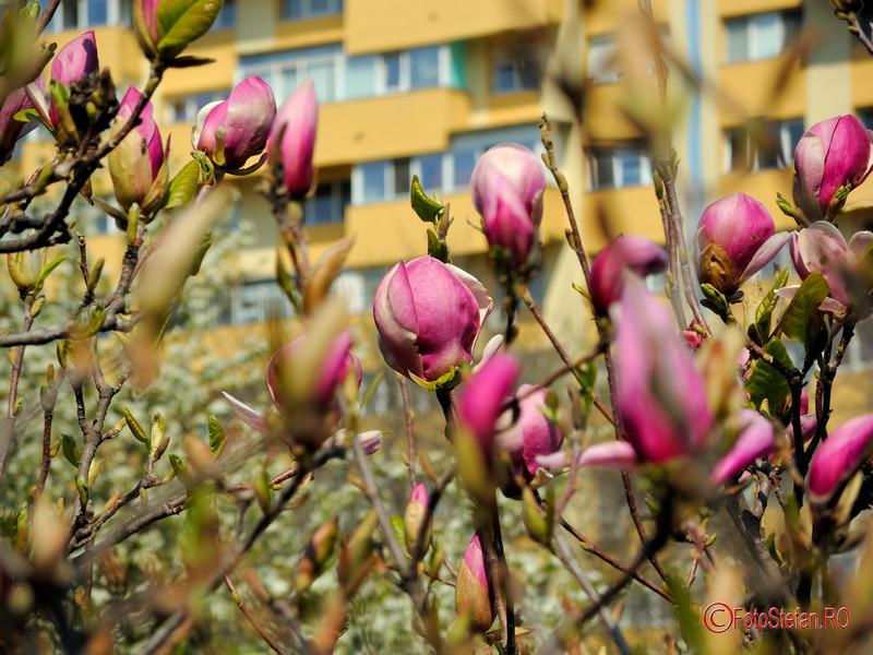 poza magnolii parcul morarilor bucuresti pantelimon