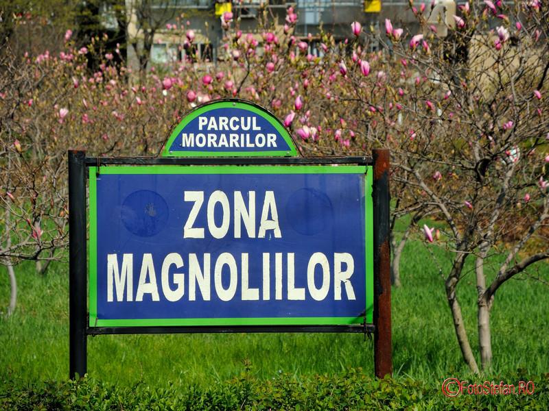 poza foto zona magnolii parcul morarilor bucuresti primavara