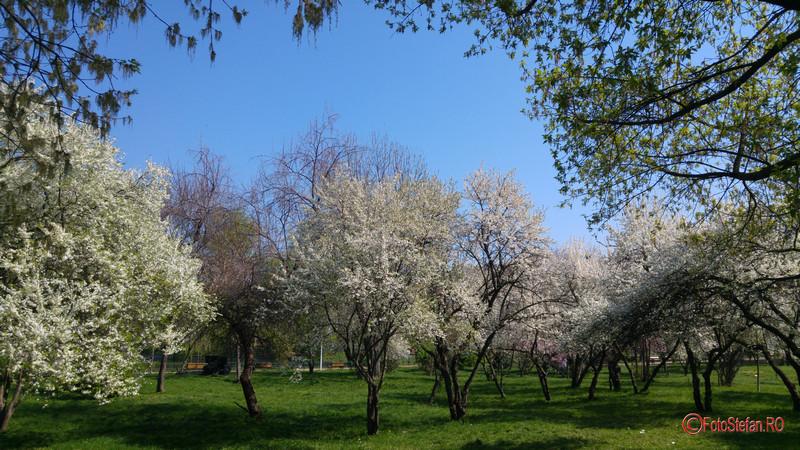 poze foto parcul morarilor primavara pantelimon