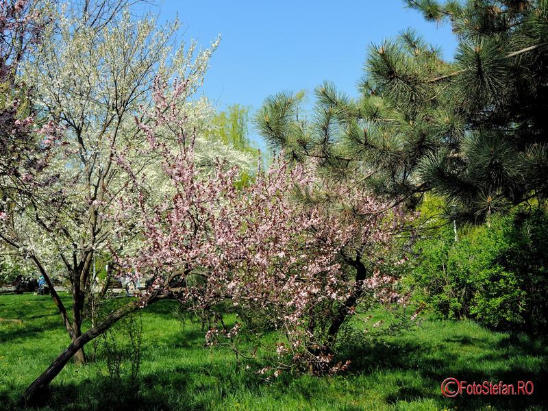 poza primavara flori parcul morarilor bucuresti