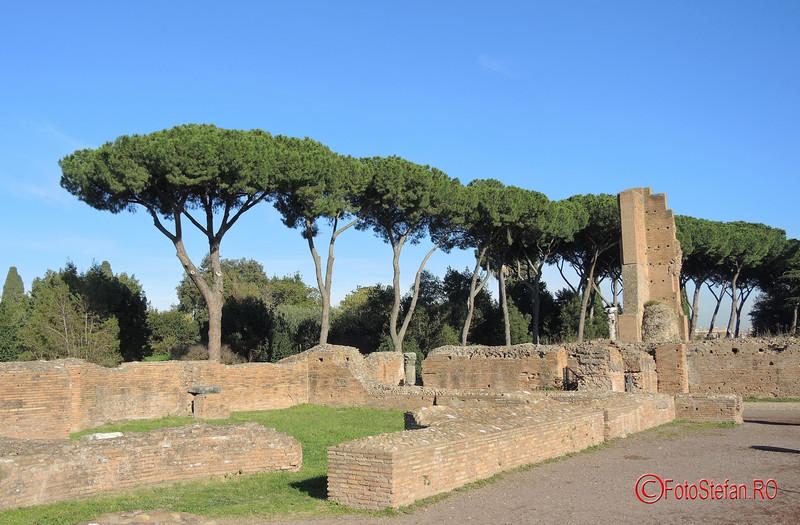 poza foto Stone Pines roma italia decembrie