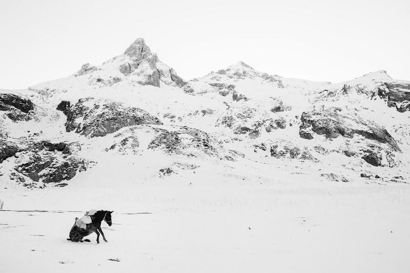 poza castigatoare swpa 2017 peisaj iarna magar