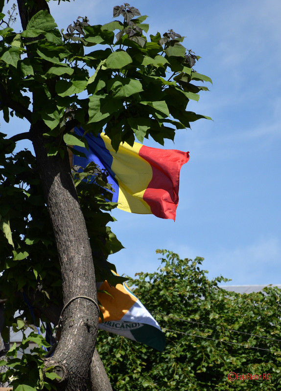 poza steagul romaniei arbore verde