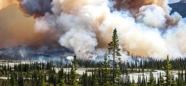 poza padure incendiu wildfire forest Sara Lindström