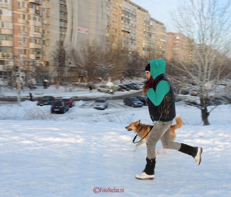 poza caine fata alergand iarna crangasi lacul morii