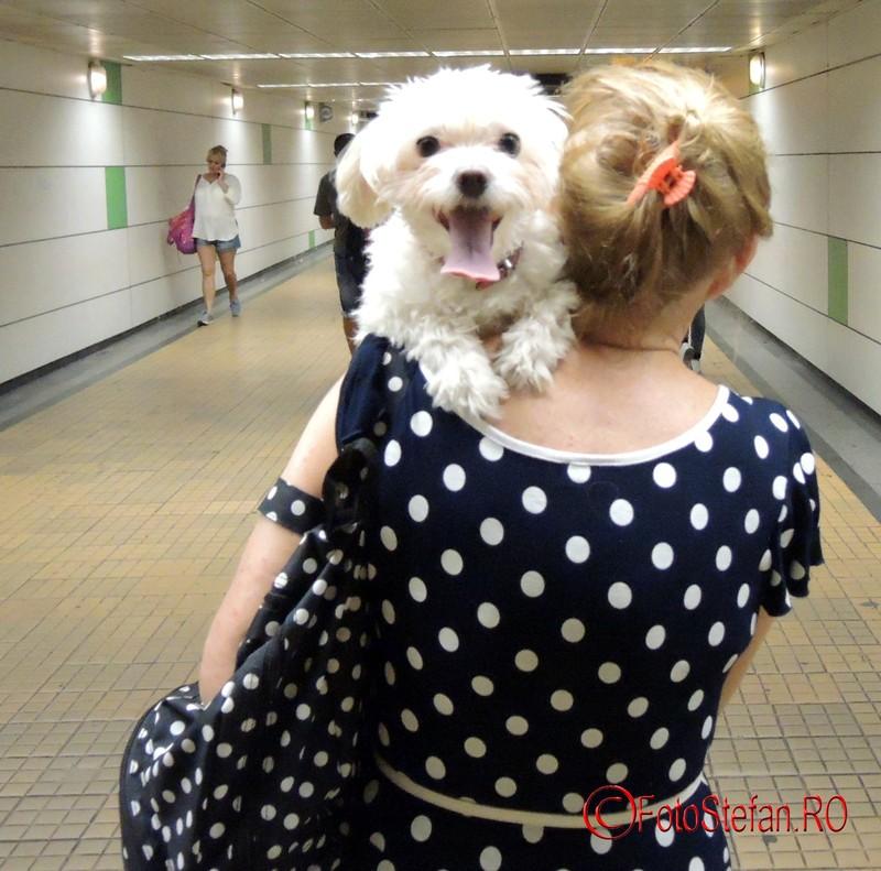 poza catel mic tinut in brate metrou bucuresti