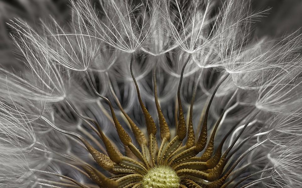 poza microscop floare craciunita nikon small world