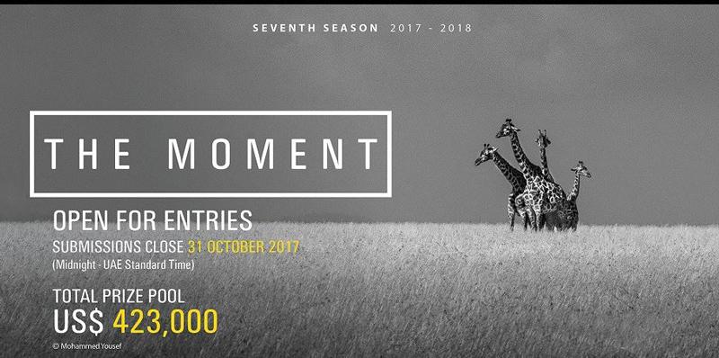 poza alba negru girafe concurs de fotografie Hamdan International Photography Award