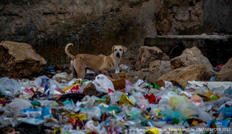 poza caine fara stapan gunoaie Karachi Wildlife