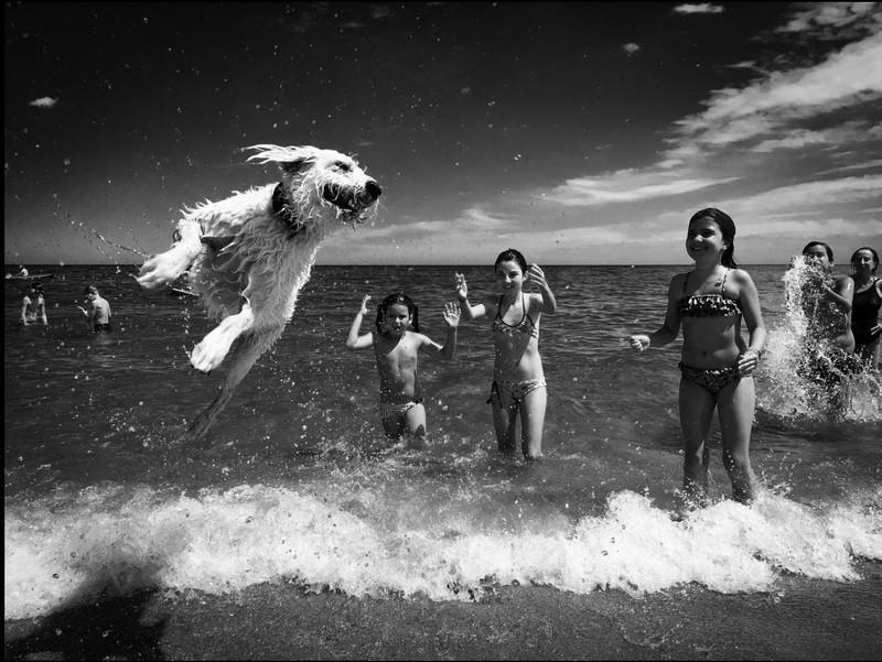 poza alb negru caine saritura mare copii fete Renata Dangelo