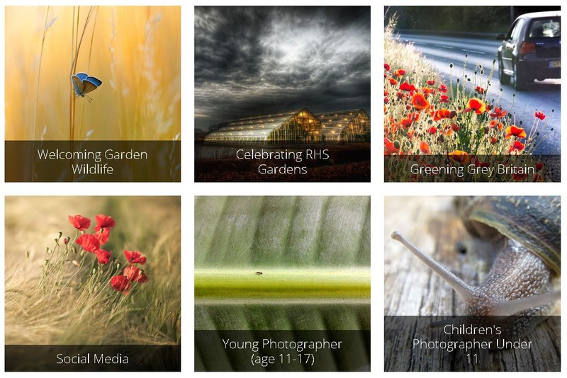 poze insecte plante pasari gradina parc Royal Horticultural Society