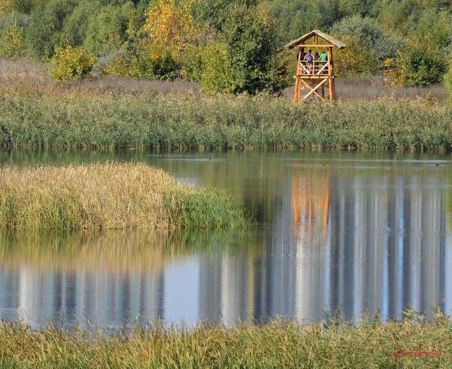 poza fotografie Foisor ornitologic Parcul Natural Vacaresti Delta Bucurestiului